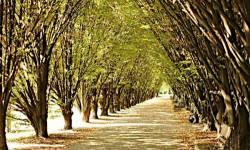 Progetti di riforestazione urbana