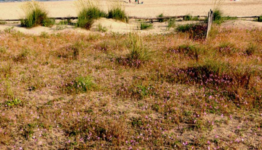 incontro sugli habitat dunali